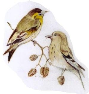 300 Rika-vogels 1